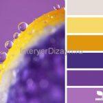 фиолетово желтый