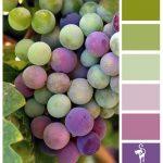 подбор цвета на кухню